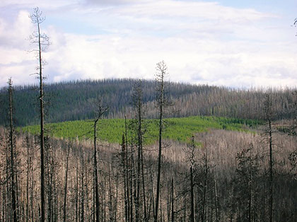 pagosa springs forestry biomass plant